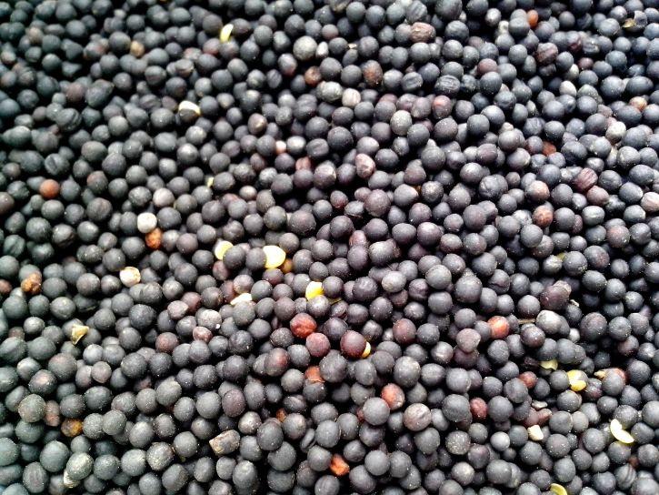 colza-seeds-725x544